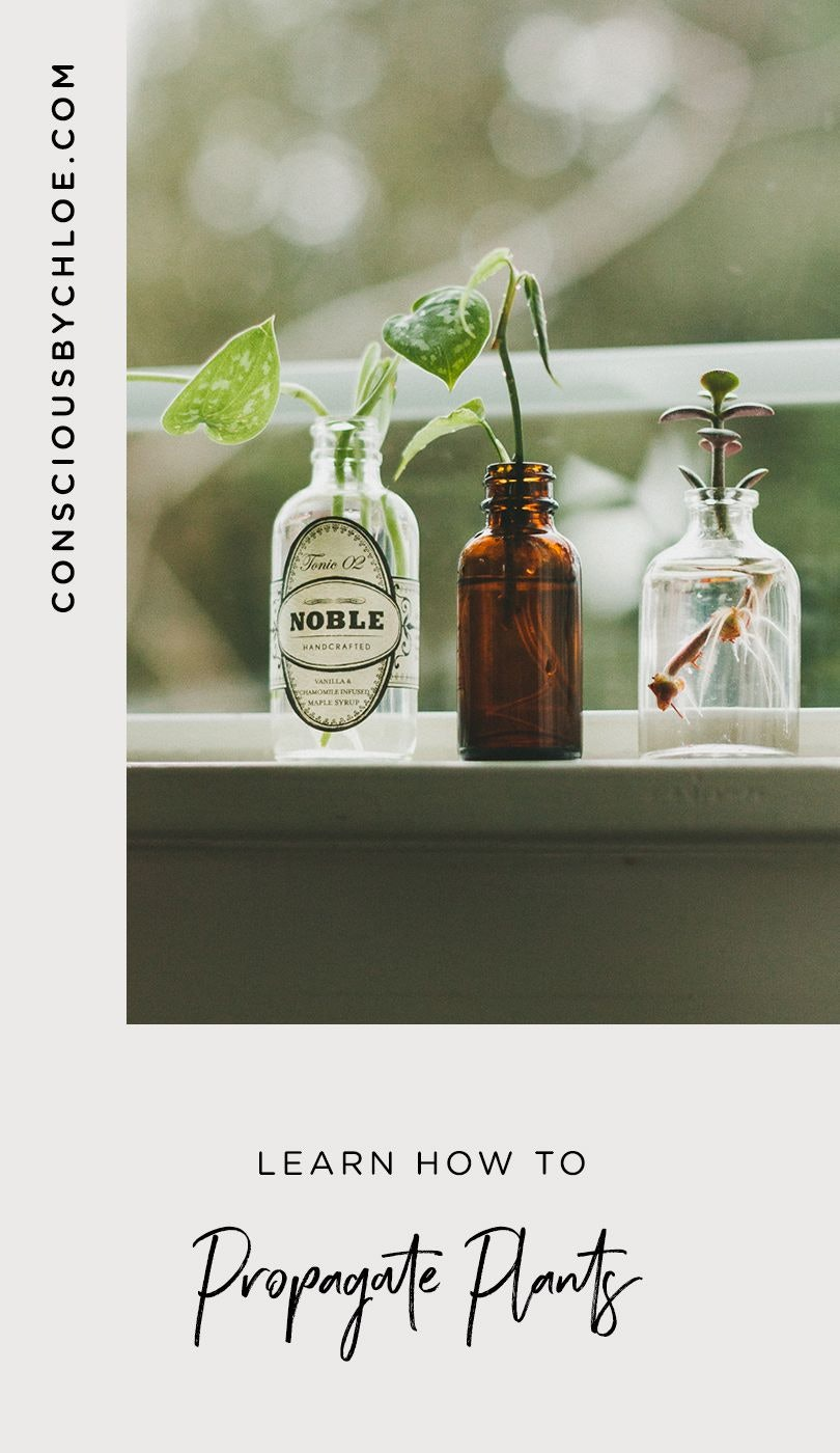 Propagating Plants on Window Sill by Conscious by Chloé