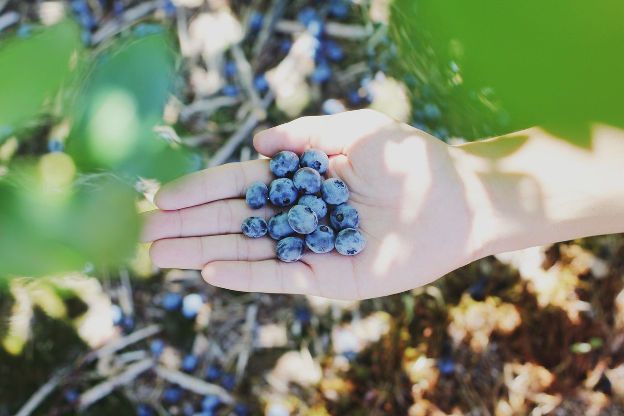 Blueberry Picking by Farsai Chaikulngamdee for Conscious by Chloé