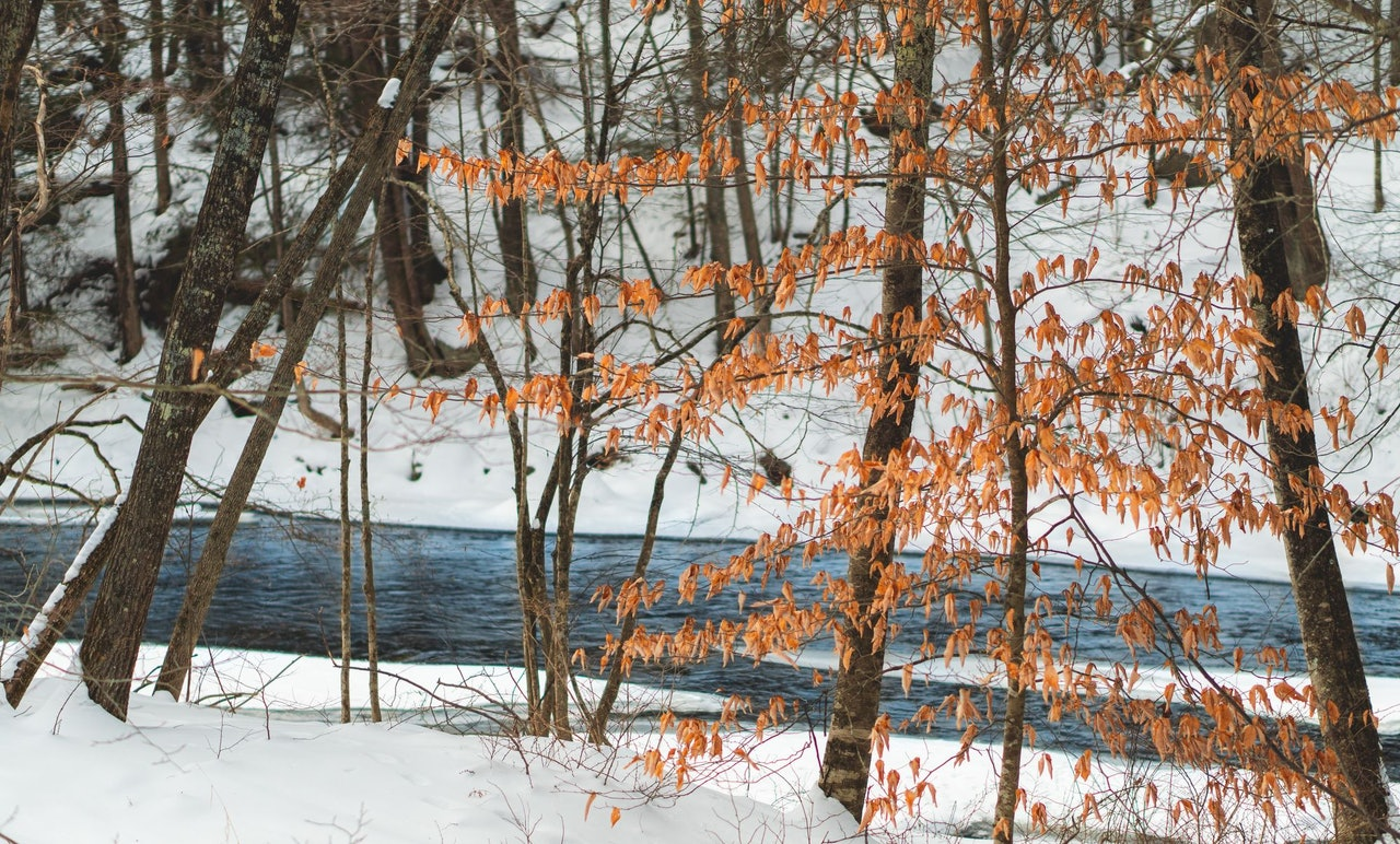 Winter River Douglas Fehr for Conscious by Chloé
