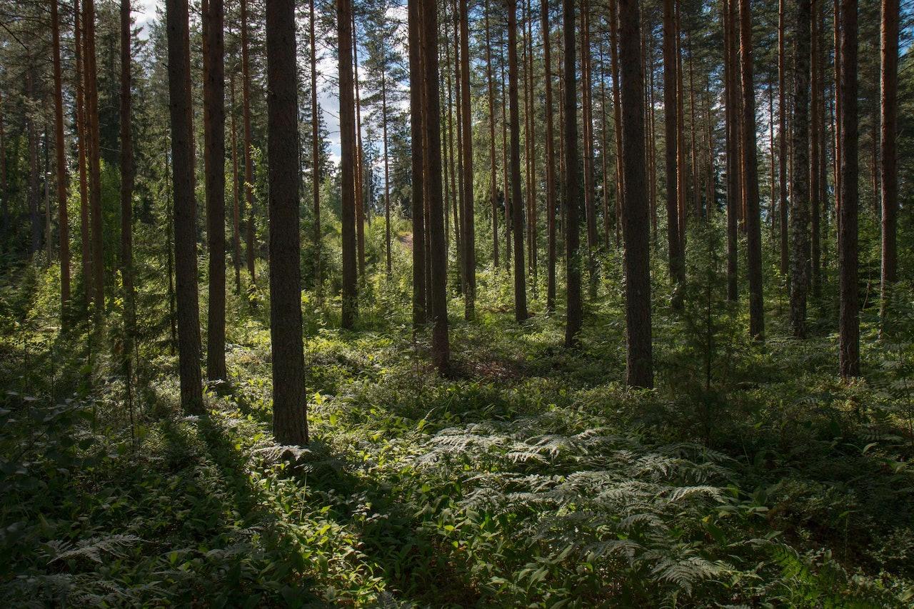 Trees by Marita Kavelashvili for Conscious by Chloé